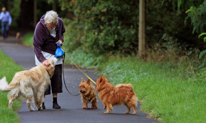 Pomoc seniorům a jejich pejskům